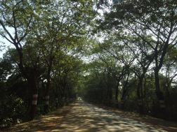 A beautiful road in Odhisa