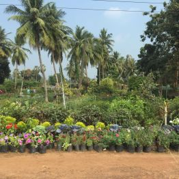 Nursery at Rajahmundry