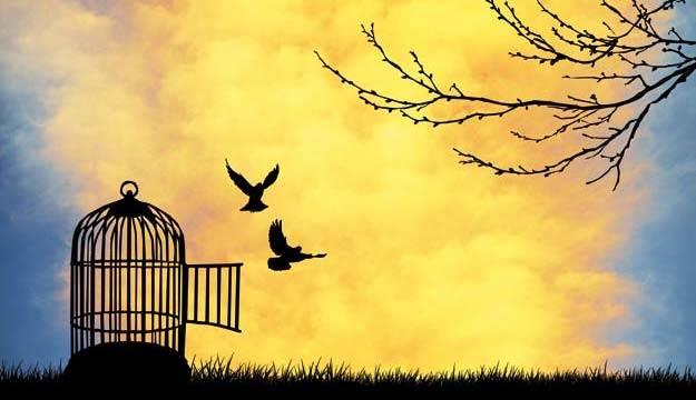 FREEDOM !!! ??